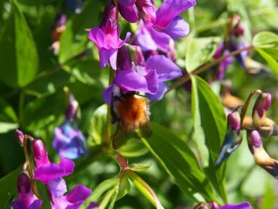 Naturnahe Gärten sind nicht nur ein Hingucker, sondern auch ein wertvoller Lebensraum für viele Tierarten. Welche Gestaltungsmöglichkeiten es hier gibt, darüber informierte kürzlich ein Vortrag von Dr. Eva Distler. Foto: Dr. Eva Distler