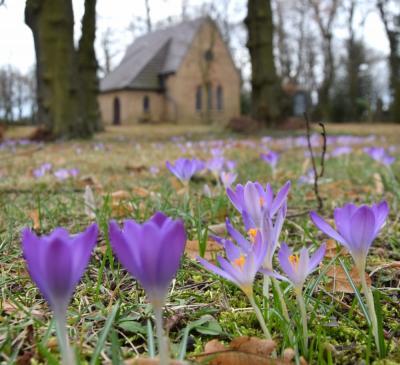 Tod und Leben: Auf dem Klettwitzer Friedhof begann die Krokusblüte
