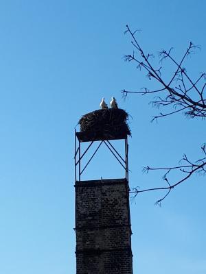 Foto zur Meldung: Kurzinformation- Störche in Zinndorf
