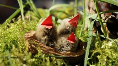 Foto zur Meldung: Vögelchen basteln mit Lisa - Unser YouTube Kanal