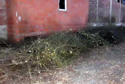 Illegale Abfallablagerung von Grün- und Heckenschnitt