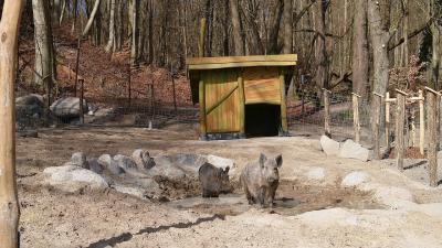 30. März 2020 Wildschweine im neuen Gehege