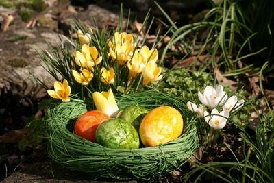 Foto zu Meldung: Wünsche zum Osterfest  von der Fraktion Die LINKE / ZUKUNFT
