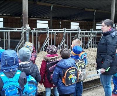 Bild der Meldung: Bei Familie Dedio konnte die 1. Klasse Nutztiere hautnah erleben