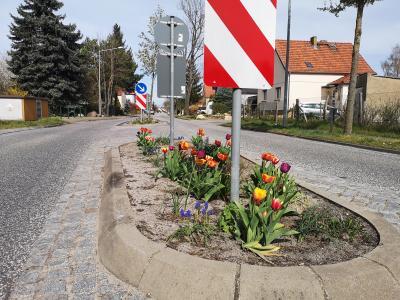 Foto zu Meldung: Ehrenamtliches Pflanzprojekt in Göhlsdorf