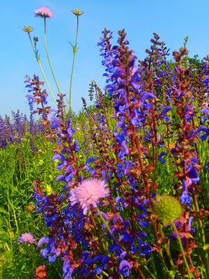 Foto zur Meldung: Mehr biologische Vielfalt auf Grünflächen der Gemeinde Nauheim