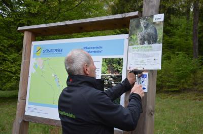 Vorschaubild zur Meldung: Niedlich aber wild - Wildkätzchen bitte im Wald lassen!