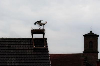 Foto zur Meldung: Drittes Storchennest bezogen