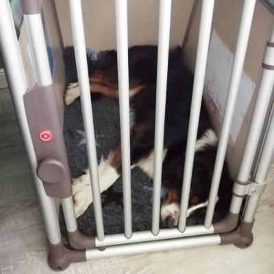 Die Hundebox als sicherer Rückzugsort
