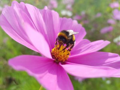 dbk: Europäische Agenda zum Umwelt- und Biodiversitätsschutz