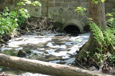 Bild der Meldung: Gewässerverunreinigung in Stexwig