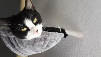 Foto zur Meldung: Katze Emmi