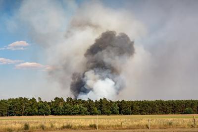 Vorschaubild zur Meldung: Wald und Waldbrandgefahr
