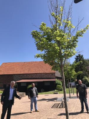 Vorschaubild zur Meldung: Bäume am Rad- und Rastplatz Weilers werden ausgetauscht