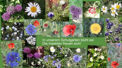 Unsere Blumenwiese