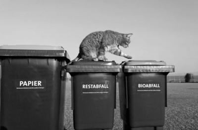 Die Abfallberater informieren - Für mehr Hygiene während der warmen Jahreszeit