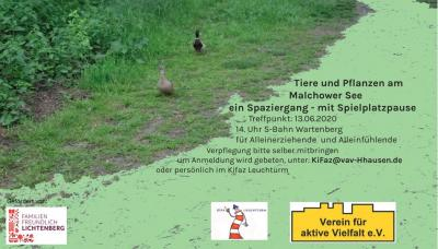 Vorschaubild zur Meldung: Spazieren gehen am Malchower See am 13. Juni