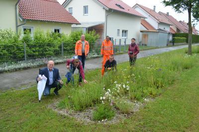 Foto zur Meldung: Blühwiesen in der Marktgemeinde