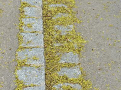 Foto zur Meldung: Aktuelle Info: Straßen- und Gehwegreinigung