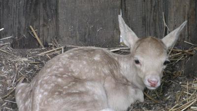 Foto zur Meldung: Nachwuchs im Tiergehege
