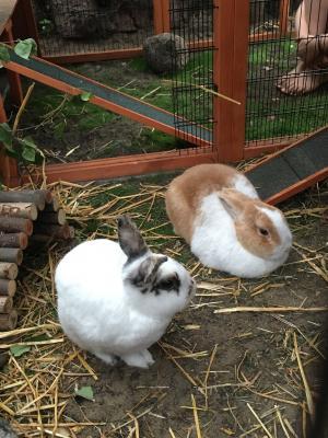 Foto zur Meldung: Cookie und Klopfer