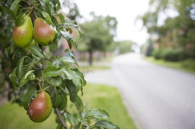 Foto zur Meldung: Obstnetzwerk Prignitz gestartet