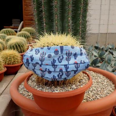 Echinocactus mundschutzii