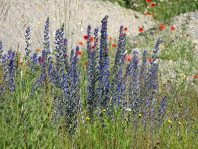 Foto zur Meldung: Sommerexkursion in die Umgebung von Silberhausen