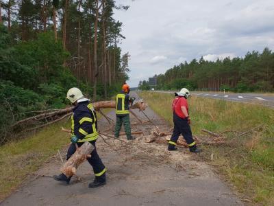 Foto zu Meldung: Umgestürzter Baum versperrte Weg
