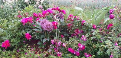 Foto zur Meldung: Nachhaltige Erinnerung an Orte und Menschen: bei Güstrower Rosenfreunden zu Gast
