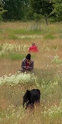 Dorfverein bei der Pflanzenbestimmung