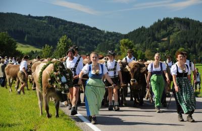 Viehscheid Maierhöfen 2021 abgesagt