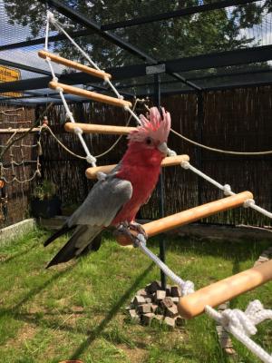 Vorschaubild zur Meldung: Kakadu Frieder und sein neues Zuhause