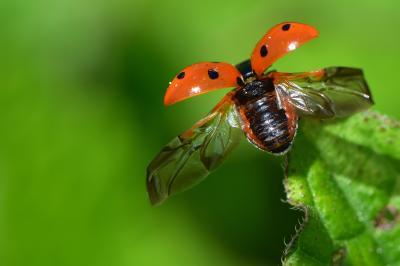 Vorschaubild zur Meldung: NABU Insektensommer 2020 - 2. Zählung vom 31.07. bis 09.08. - zählen Sie mit