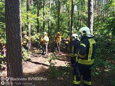 Vorschaubild zur Meldung: Waldbodenbrand in Damsdorf