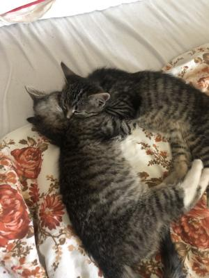 Foto zur Meldung: Karla und Milou