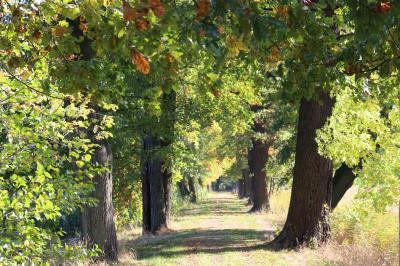 Foto zur Meldung: Baumschau im Park Saßleben bringt neue Erkenntnisse