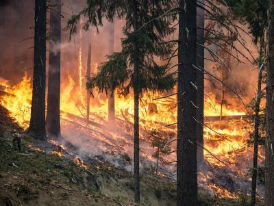 Hohe Waldbrandgefahr in weiten Teilen Hessens.