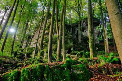 Waldbaden © Horst Meidenbauer