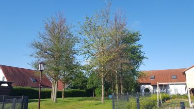Foto zu Meldung: Helfen Sie Straßenbäumen durch die Trockenheit