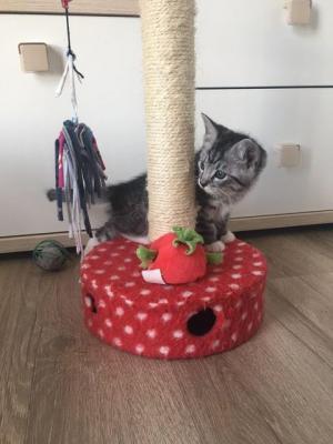 Foto zur Meldung: Neues Zuhause für Momo