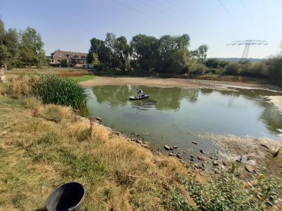 Vorschaubild zur Meldung: Notabfischung im Teich Othal
