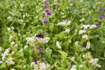 Foto zur Meldung: Energie aus Wildpflanzen - weitere Flächen für Anbau gesucht