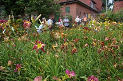 Foto zur Meldung: Soweit das Auge reicht: Gerald Hohls hat uns vor allem mit Taglilien begeistert