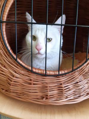 Foto zur Meldung: Katze in Beeskow gefunden