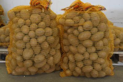 Vorschaubild zur Meldung: Start der Kartoffelernte