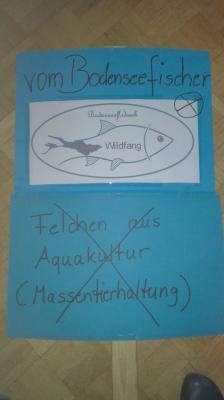 Berufsfischer gegen Netzgehege im Bodensee