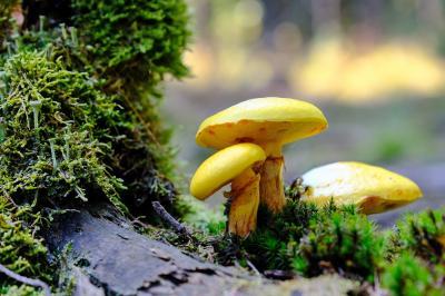 Pilze © Horst Meidenbauer