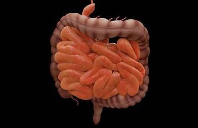 Bild der Meldung: Der Darm - Mitte des Körpers