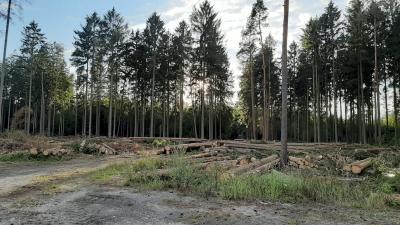 Foto zur Meldung: Wald